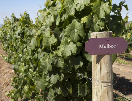 5 Things You May Not Know About Malbec